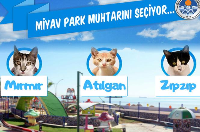 Dünya Kediler Gününde Kedi Muhtar! Mersin'de Proje İle Kurulan Miyav Park Muhtarını Seçti