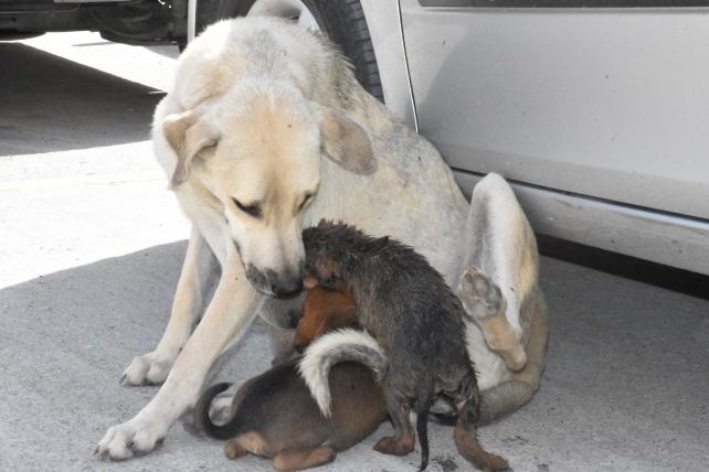 Su Gideri Borusuna Düşen Yavru Köpeğin İmdadına Tarsus Belediyesi Ekipleri Yetişti