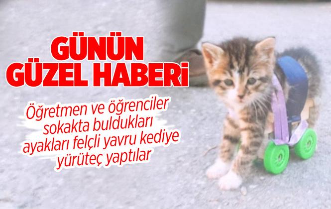 Mersin'de Öğretmen ve Öğrenciler Felçli Yavru Kediye Yürüteç Yaptılar