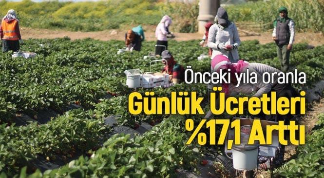 Mevsimlik Tarım İşçilerinin Ortalama Günlük Ücretleri %17,1 Arttı